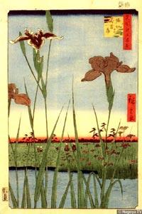 Хирошигэ. Ирисы в Хорикири, 1857